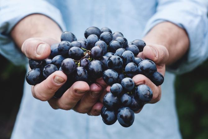 grapes hydro